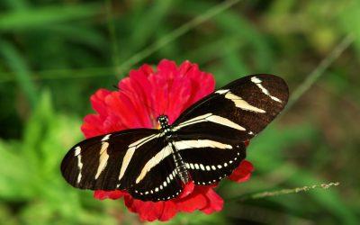 Информация о саду бабочек в Дубае