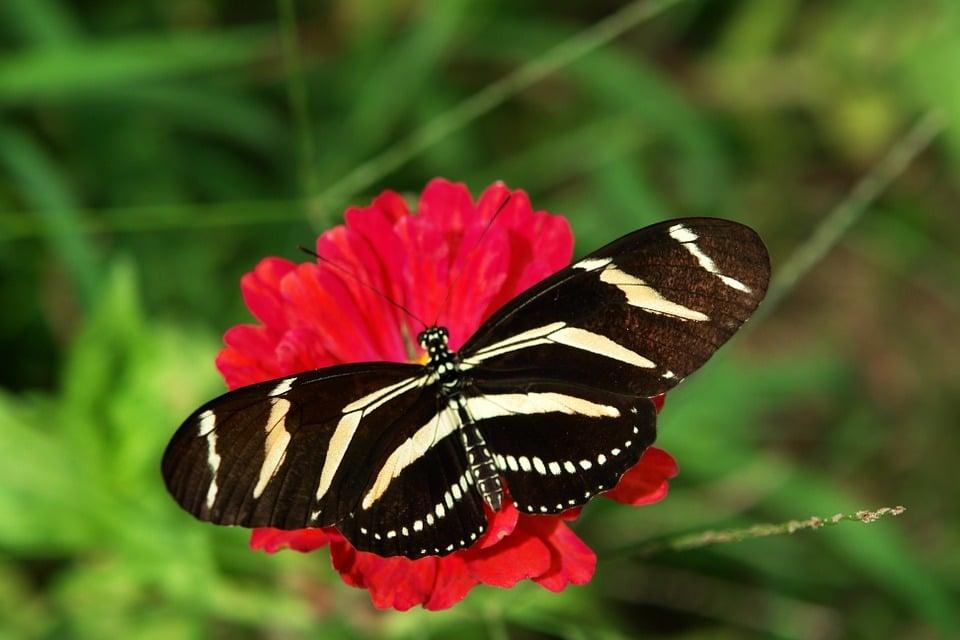 Informazioni sul giardino delle farfalle a Dubai