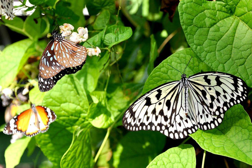 1200-butterfly-farm-حديقة الفراشات في كوالالمبور