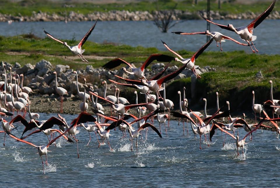 أنشطة في جنة الطيور في ازمير تركيا