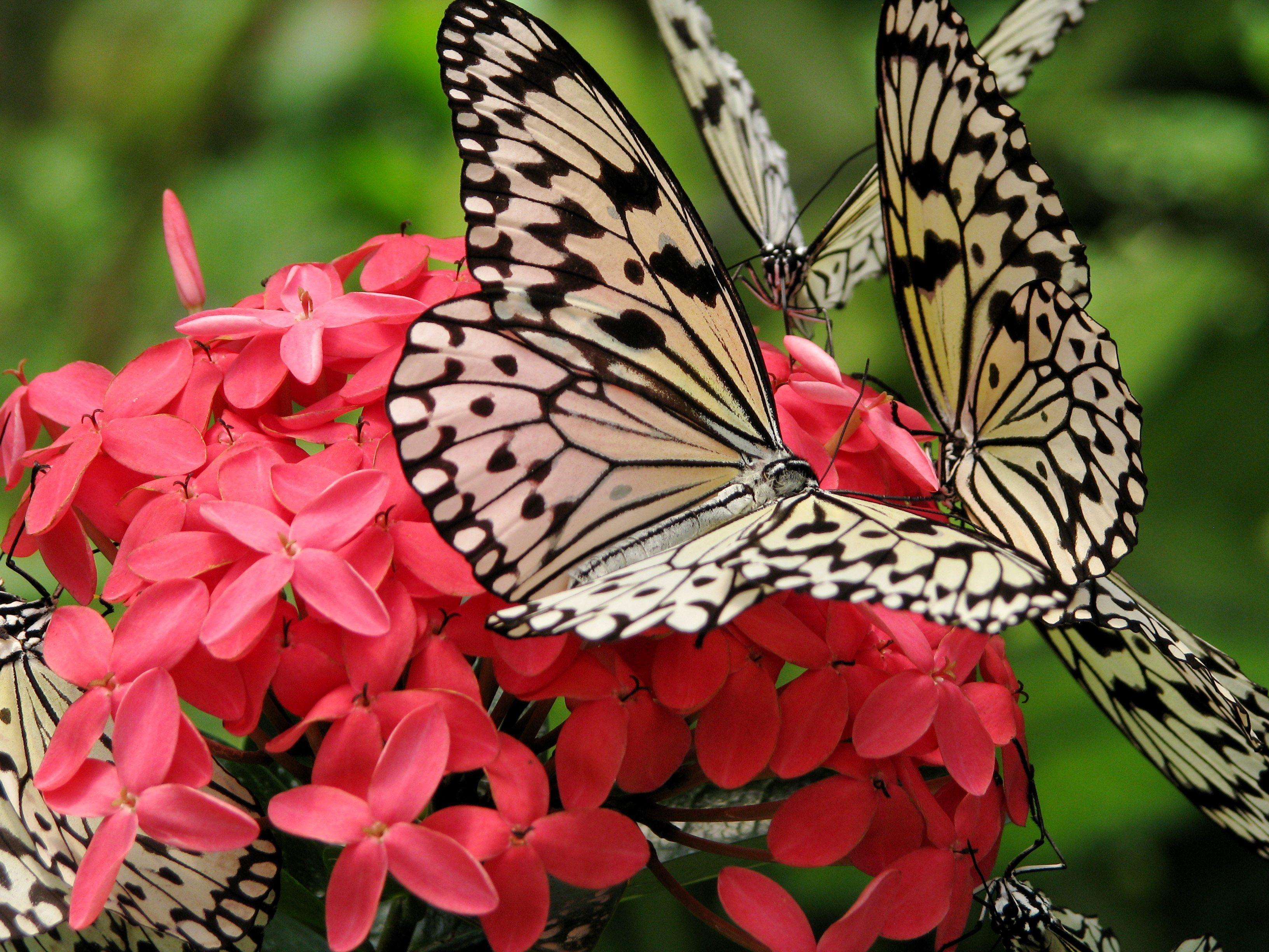 اهم الانشطه في حديقة الفراشات في كوالالمبور