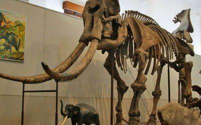المتحف الجيولوجي المصري