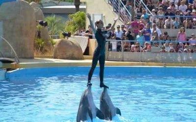 잠수함 투어와 돌고래가 피라미드에서 보여줍니다.