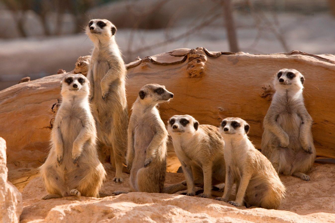 اهم ألانشطة في حديقة حيوانات العين أبو ظبي