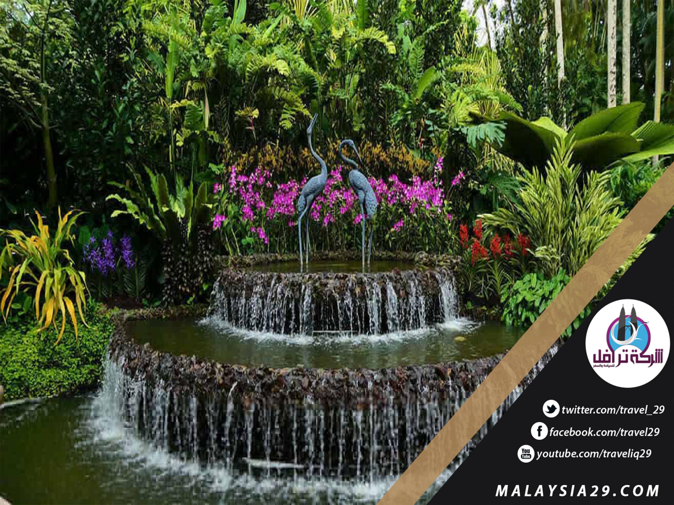 أفضل 7 أنشطة في حديقة سنغافورة النباتية