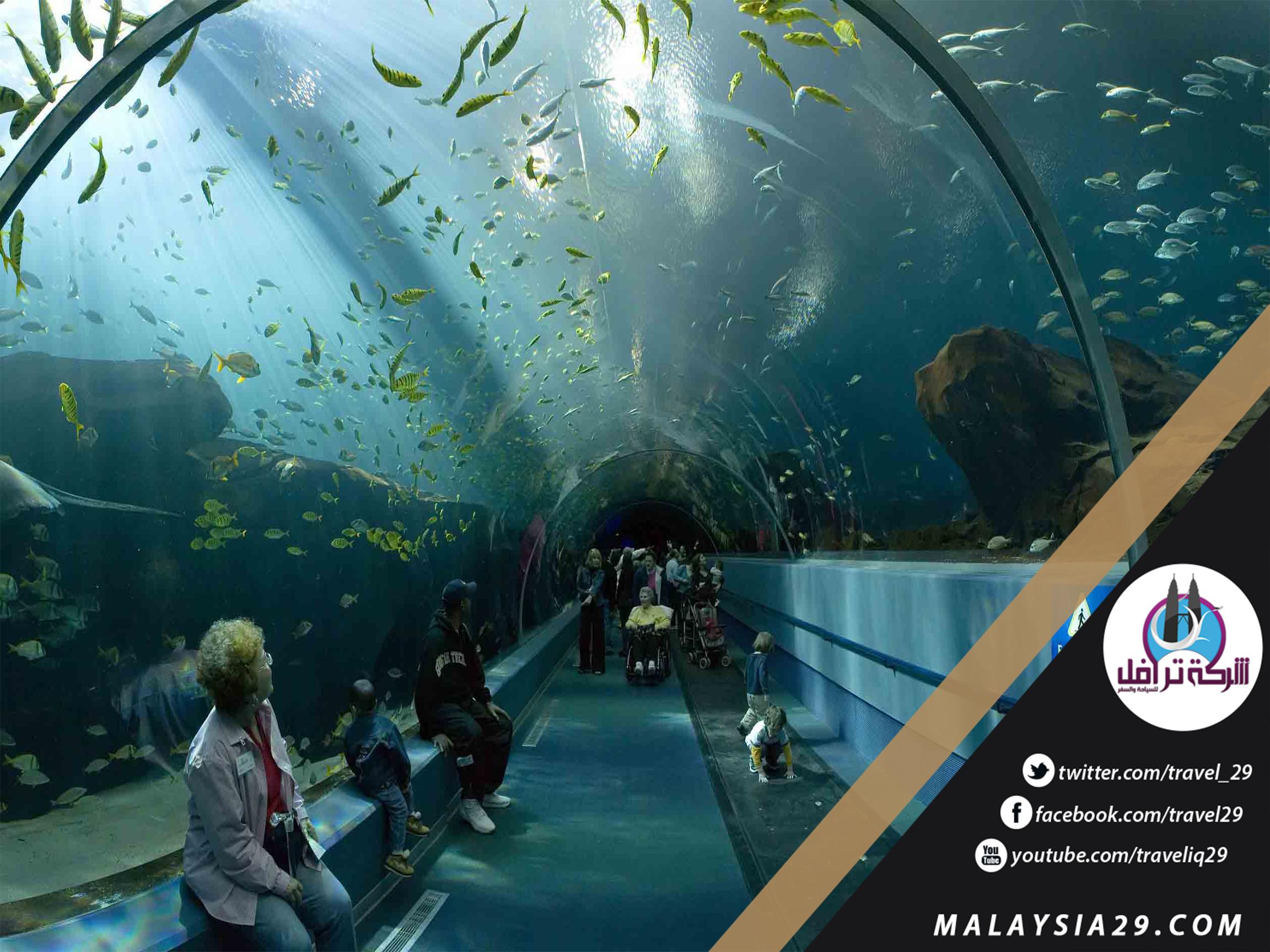أفضل 5 أنشطة في عالم تحت الماء لنكاوي | عالم تحت الماء لنكاوى ماليزيا