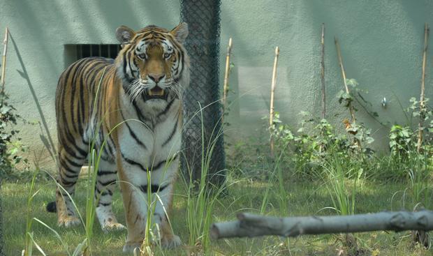 أنشطة في حديقة حيوانات بورصة تركيا