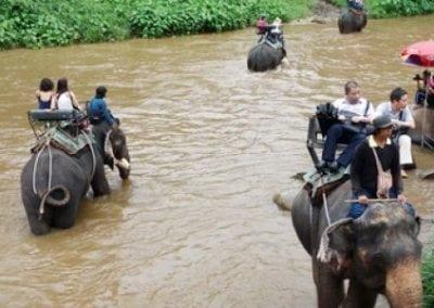 سفاري الغابة وركوب الأفيال , شيانغماي