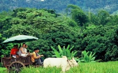 Tour del safari forestale Chiang Mai
