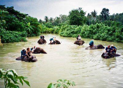 قرية باتايا للفيلة