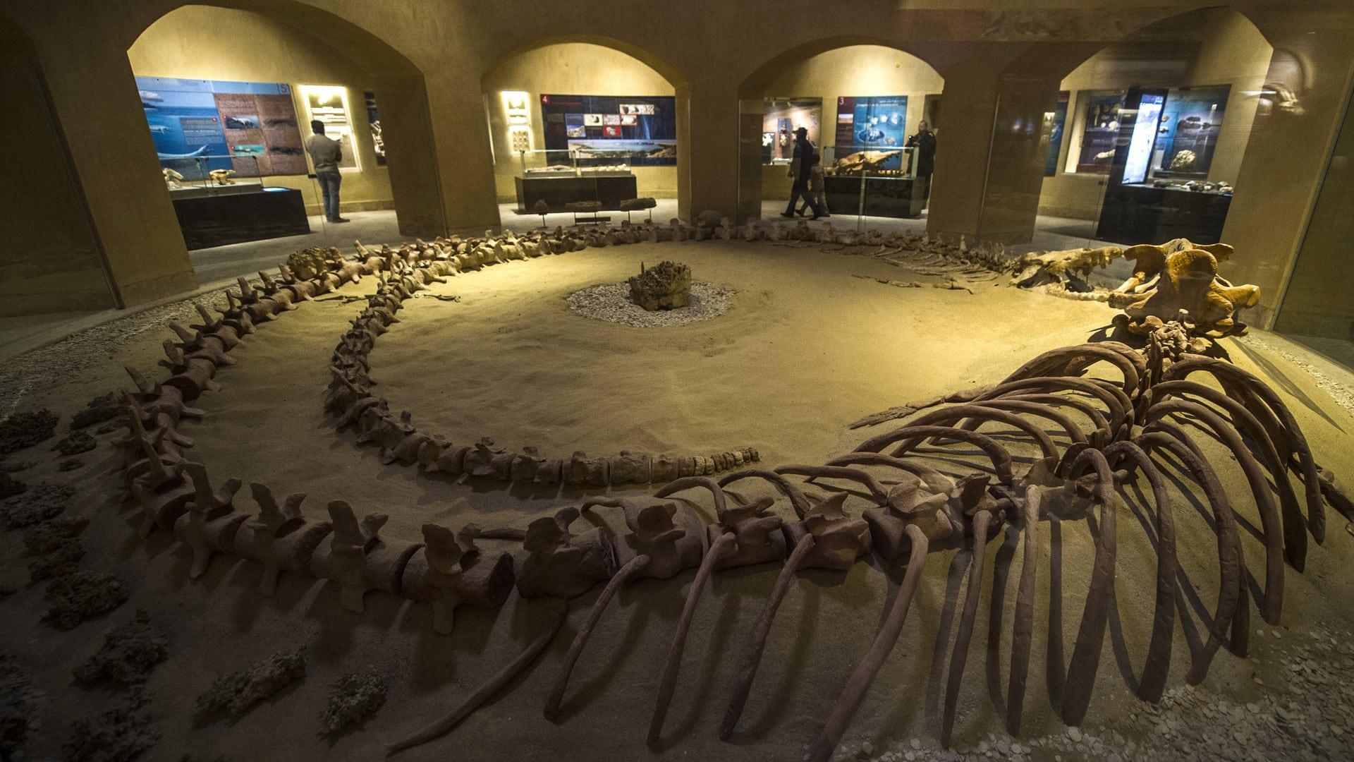 وادي الحيتان مصر