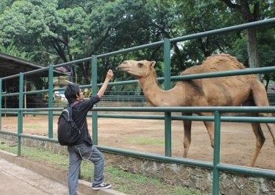 اهم الانشطة السياحية فى مدينة باندونق | السيحة فى مدينة باندونق اندونيسيا