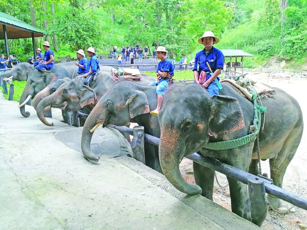 حديقة حيوانات دوسيت تايلاند