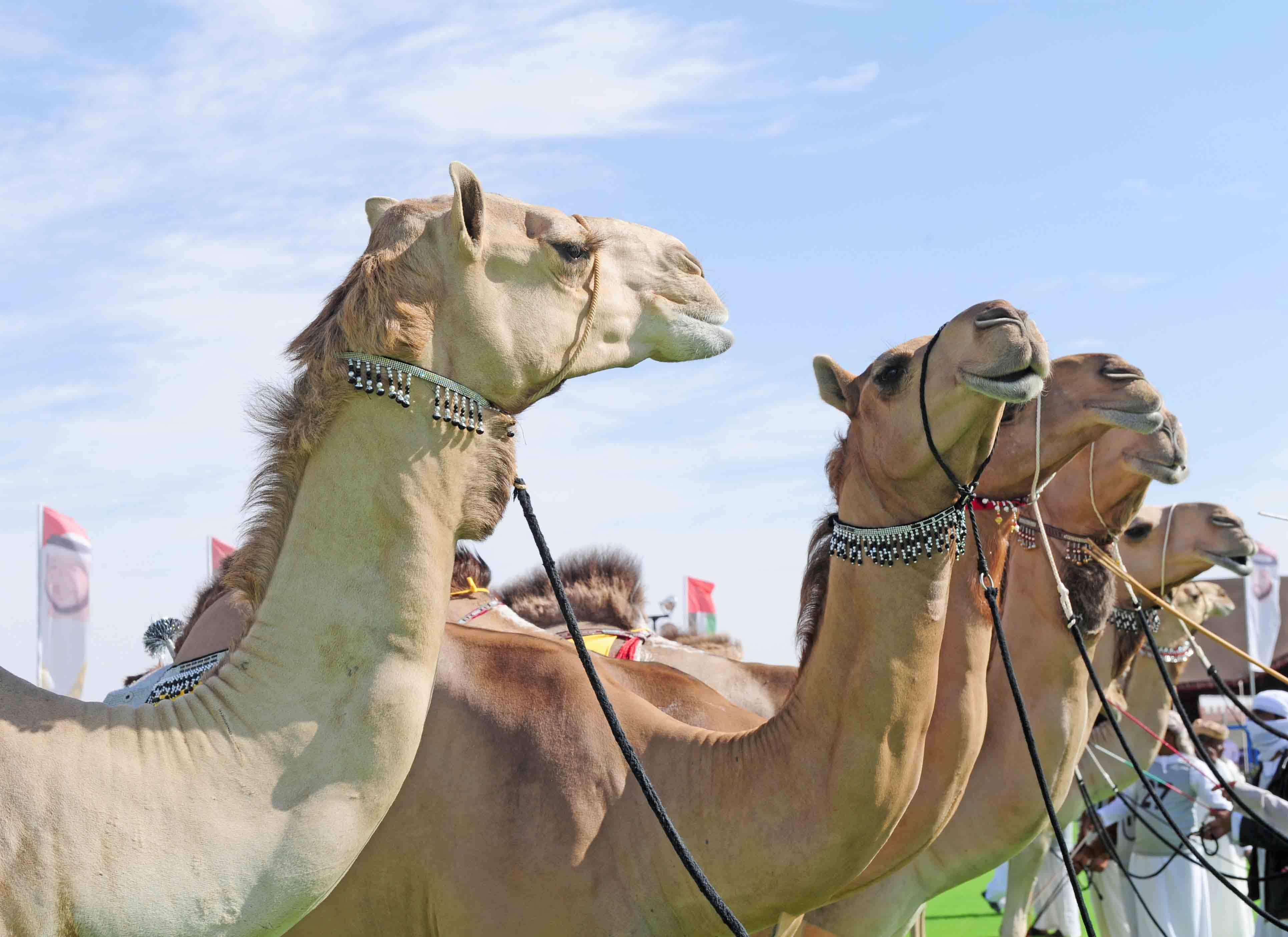 أنشطة داخل حديقة صقر رأس الخيمة الامارات | حديقة صقر رأس الخيمة