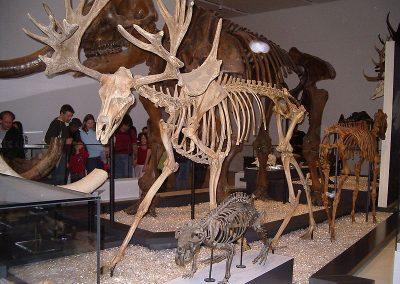 جوله فى متحف الجيولوجيا