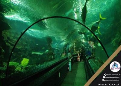 حديقة عالم تحت الماء فى سنغافورة