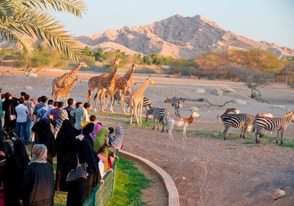 أنشطة في حديقة حيوانات العين أبو ظبي