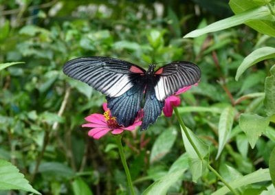 حديقة الفراشات فى جزيرة ساموي