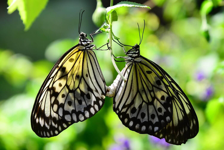 مملكة الفراشات في سنغافورة
