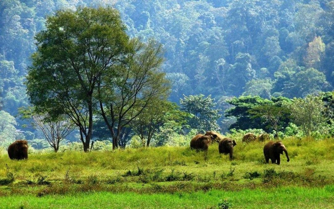 حديقة الفيلة فى شنغماى