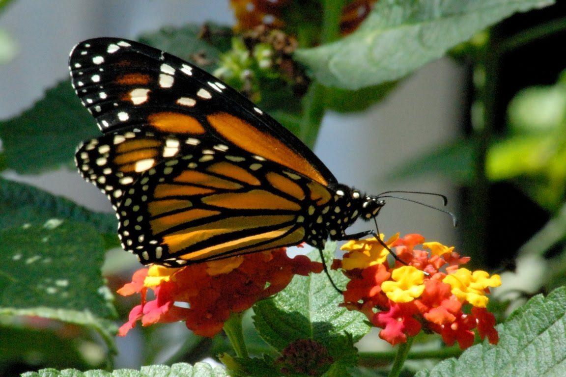 حديقة الفراشات في كوالالمبور