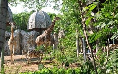 حديقة الحيوانات دوسيت