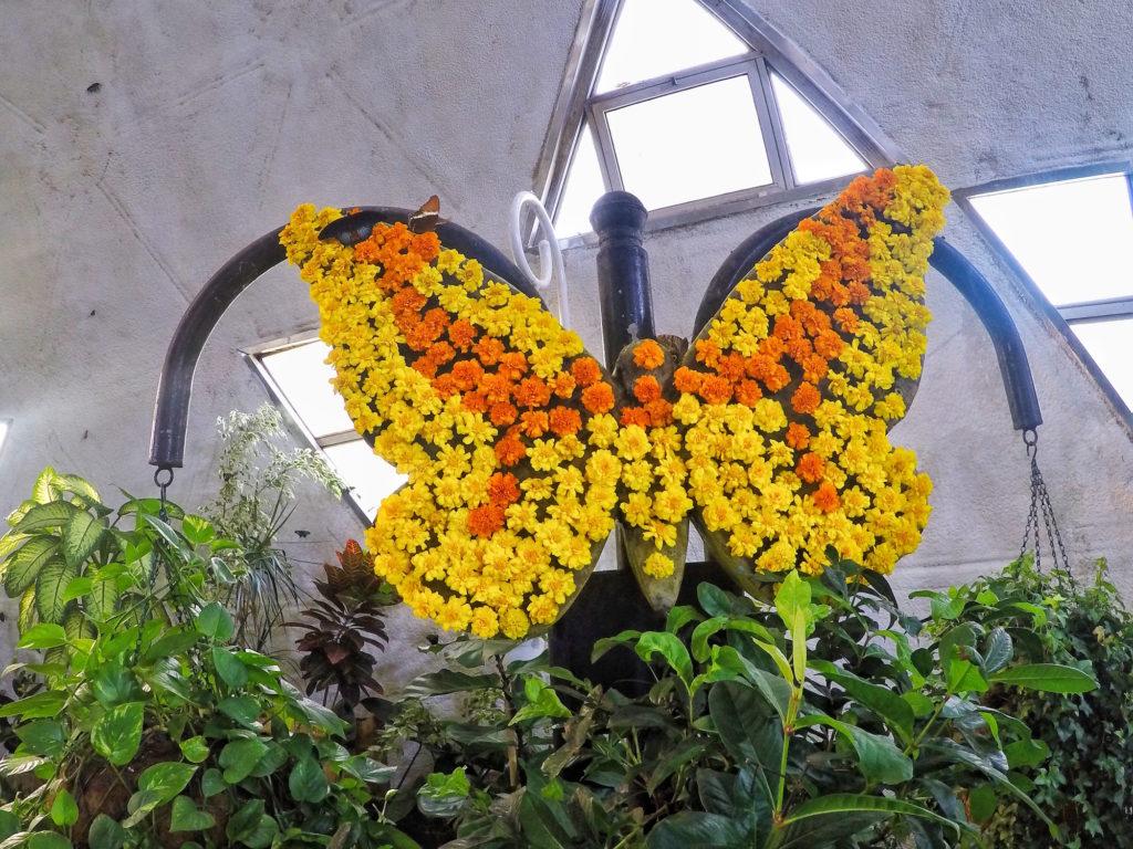 روعه التجول في حديقه الفراشات المبهره والرائعه والاستمتاع بما فيها من جمال