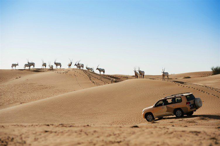 أنشطة في محمية دبي الصحراوية الامارات