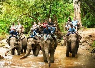 حديقة الفيلة في شنغماي
