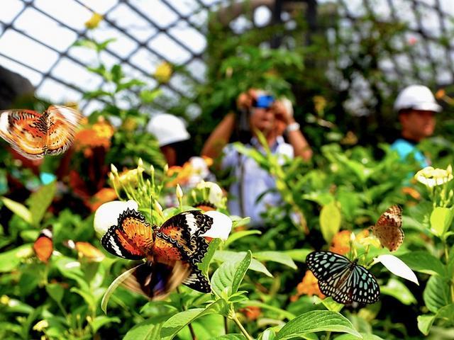 أفضل 6 أنشطة في حديقة الفراشات في بينانج ماليزيا