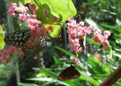حديقة الفراشات فى ساموي