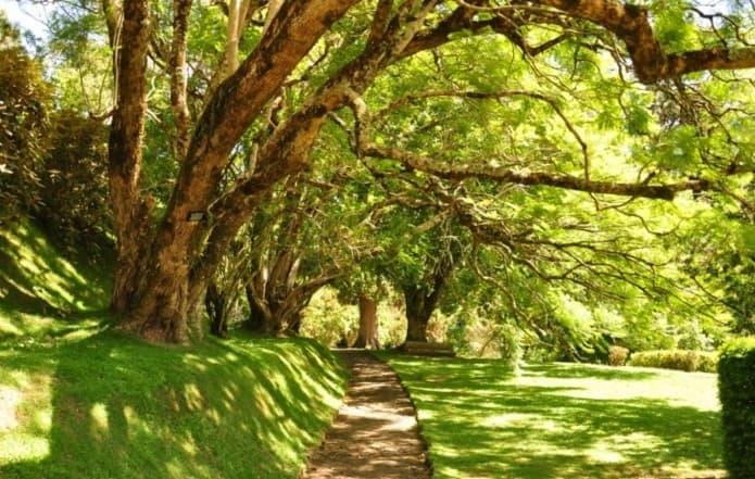 أهم الانشطة في حديقة هاكغالا النباتية نوراليا سريلانكا