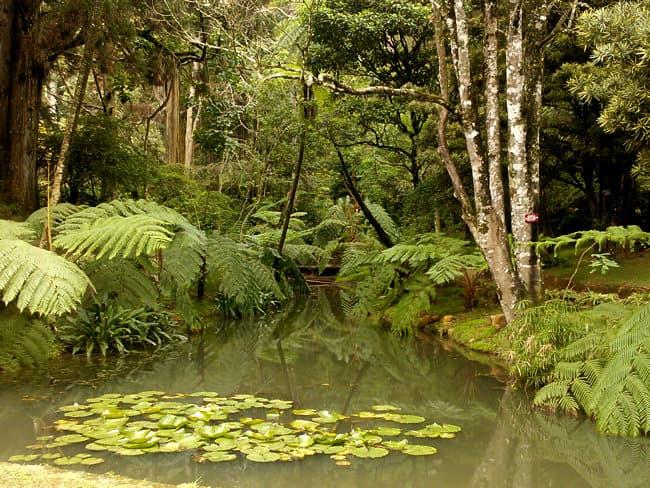 حديقة هاكغالا النباتية سيريلانكا