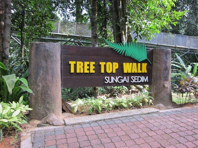 La pasarela de la cresta del árbol en Malasia