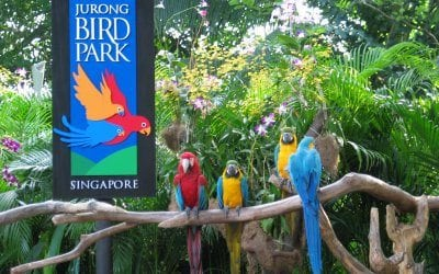 Yurong Bird Park in Singapore