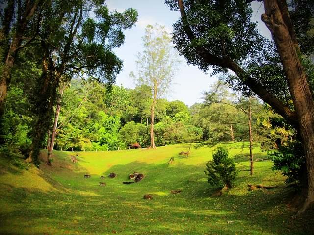 أفضل أنشطة في حديقة القردة بينانج ماليزيا