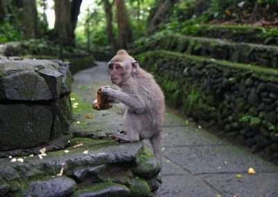 غابة القرود أوبود