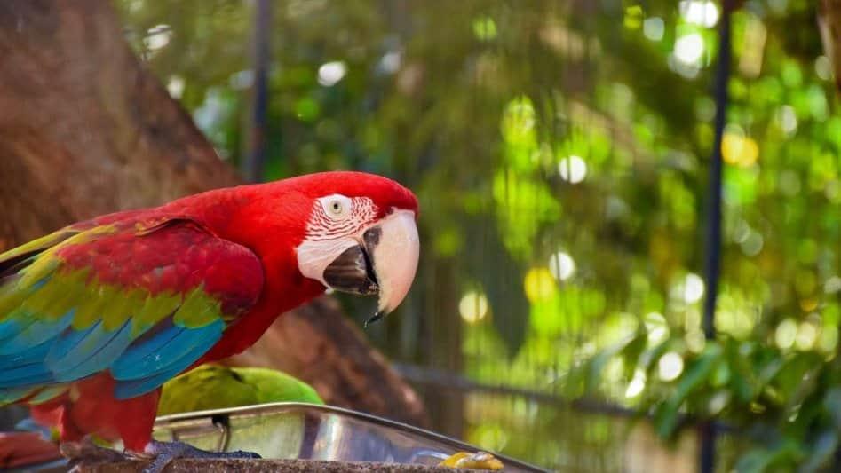 أفضل 5 أنشطة في حديقة الحيوان الوطنية كولومبو