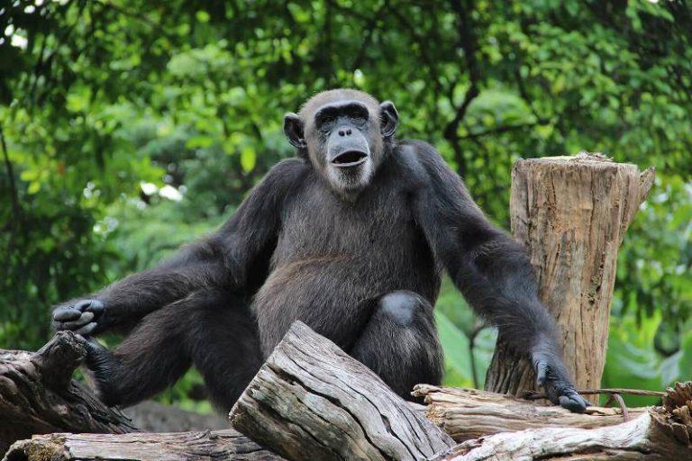 حديقة الحيوان الوطنية سيريلانكا