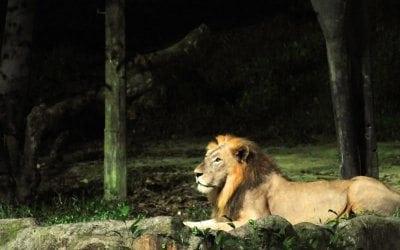 Night Safari à Singapour