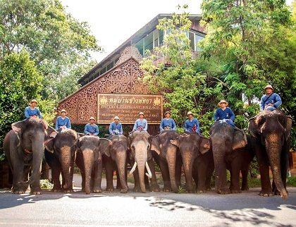 قرية الفيله تايلاند