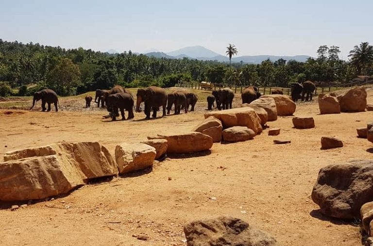 ميتم الفيلة فى كاندى سيريلانكا