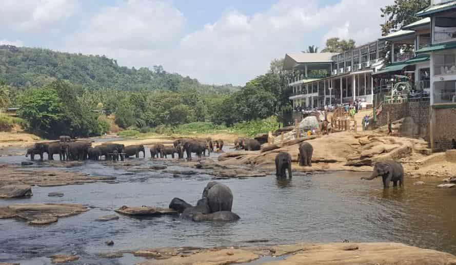 السياحة فيكاندي