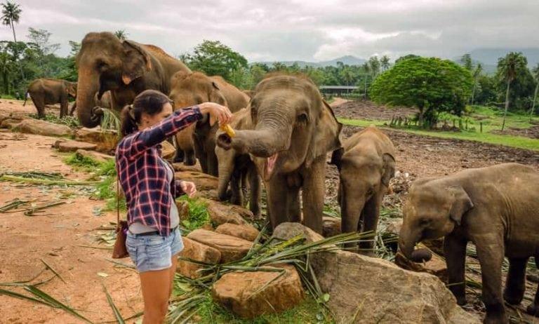 ميتم الفيلة فى كاندى سريلانكا