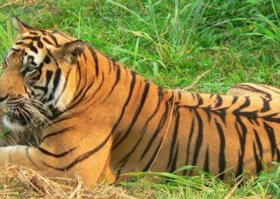 حديقة حيوان راغونان