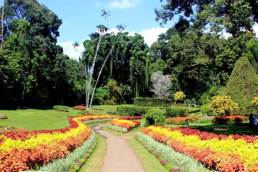 أفضل 7 أنشطة في الحديقة النباتية الملكية كاندي سريلانكا