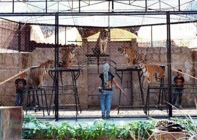 ساموي اكواريوم وحديقة النمور