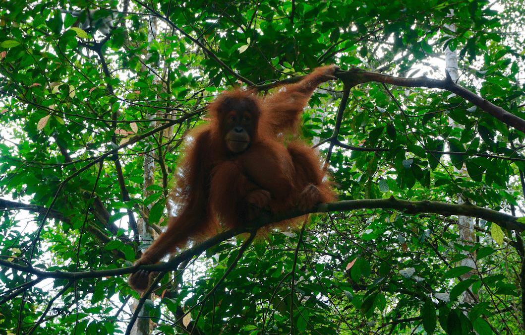 بوابة الجحيم سومطرة