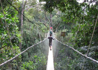 افضل المنتزهات والمحميات الوطنية في ماليزيا