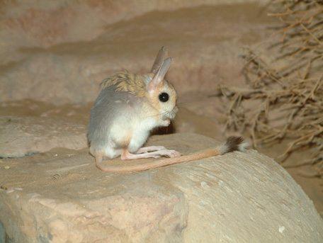 أنشطة في منتزه صحراء الشارقة في الامارات